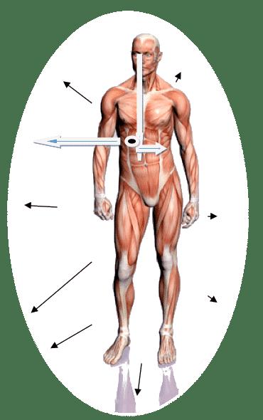 Osteopata Francesco Bertino | Genova | Massofisioterapista, Qi-gong, 5 leggi biologiche Dott. Hamer